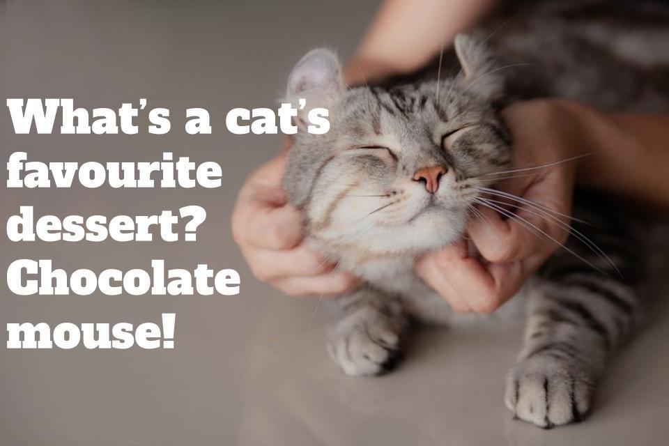 kitten jokes image shutterstock