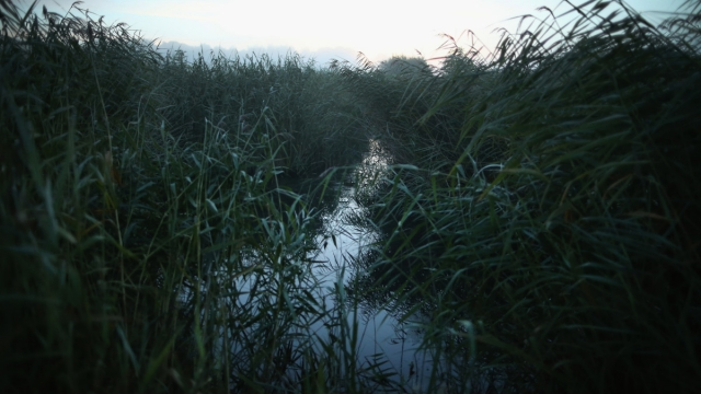 A stretch of wetland in East Sussex