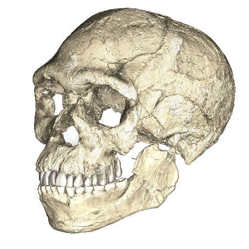 A composite reconstruction of the earliest known Homo sapiens fossils from Jebel Irhoud in Morocco