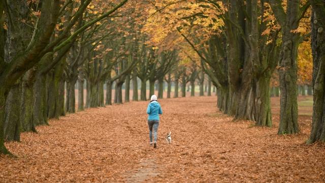 Running in woods