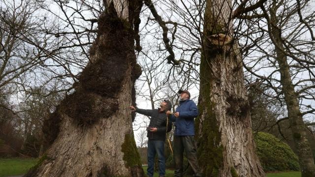 """""""Elite"""" elm trees can resist or avoid Dutch elm disease (Photo: PA)"""
