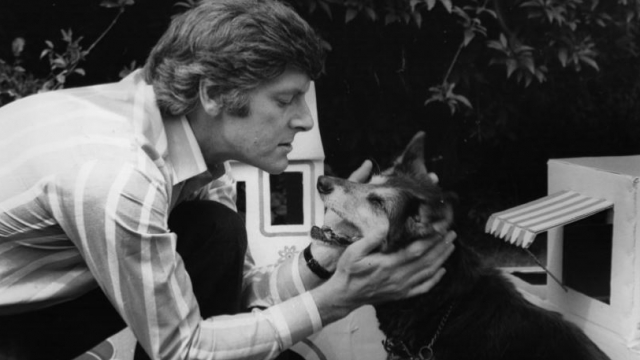 Dog lover Peter Purves has served as the 'voice of Crufts' for more than 40 years (Photo: Getty)