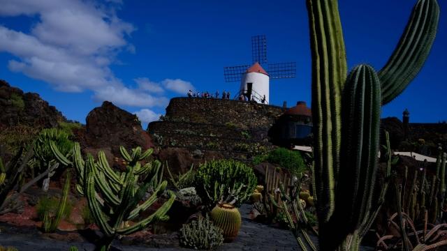Cesar Manrique's Cactus Garden in the village of Guatiza (photo: Getty Images)