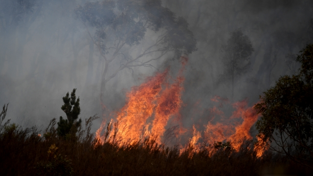 Strong winds create havoc by blowing up dust and ash as firefighters battle to control an unpredictable fire in the Tallaganda National Park