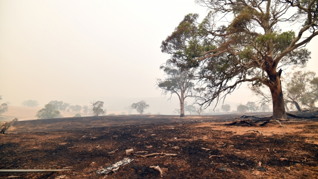 Mr Miller is one of an estimated 19,000 farmers who have had their livelihoods shattered after record-breaking wildfires tore through the south and east of Australia