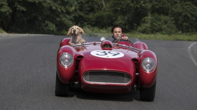 Critics didn't like 'The Art of Racing in the Rain' - but its canine performances are a cause for celebration (Photo: 20th Century Fox)