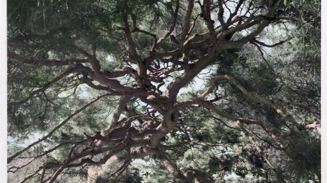 Our ambivalence is beautifully expressed by the Japanese artist Shi Guowei with an image of an ancient pine made by combining multiple shots
