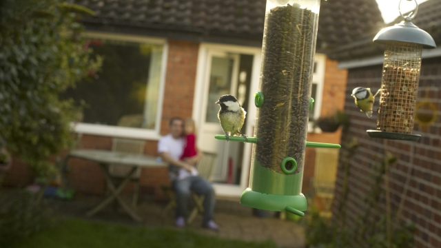 The RPSB are running a #BreakfastBirdwatch - see what birds you can spot outside!