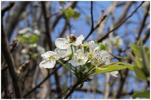 Pollen count (Photo: Shutterstock)