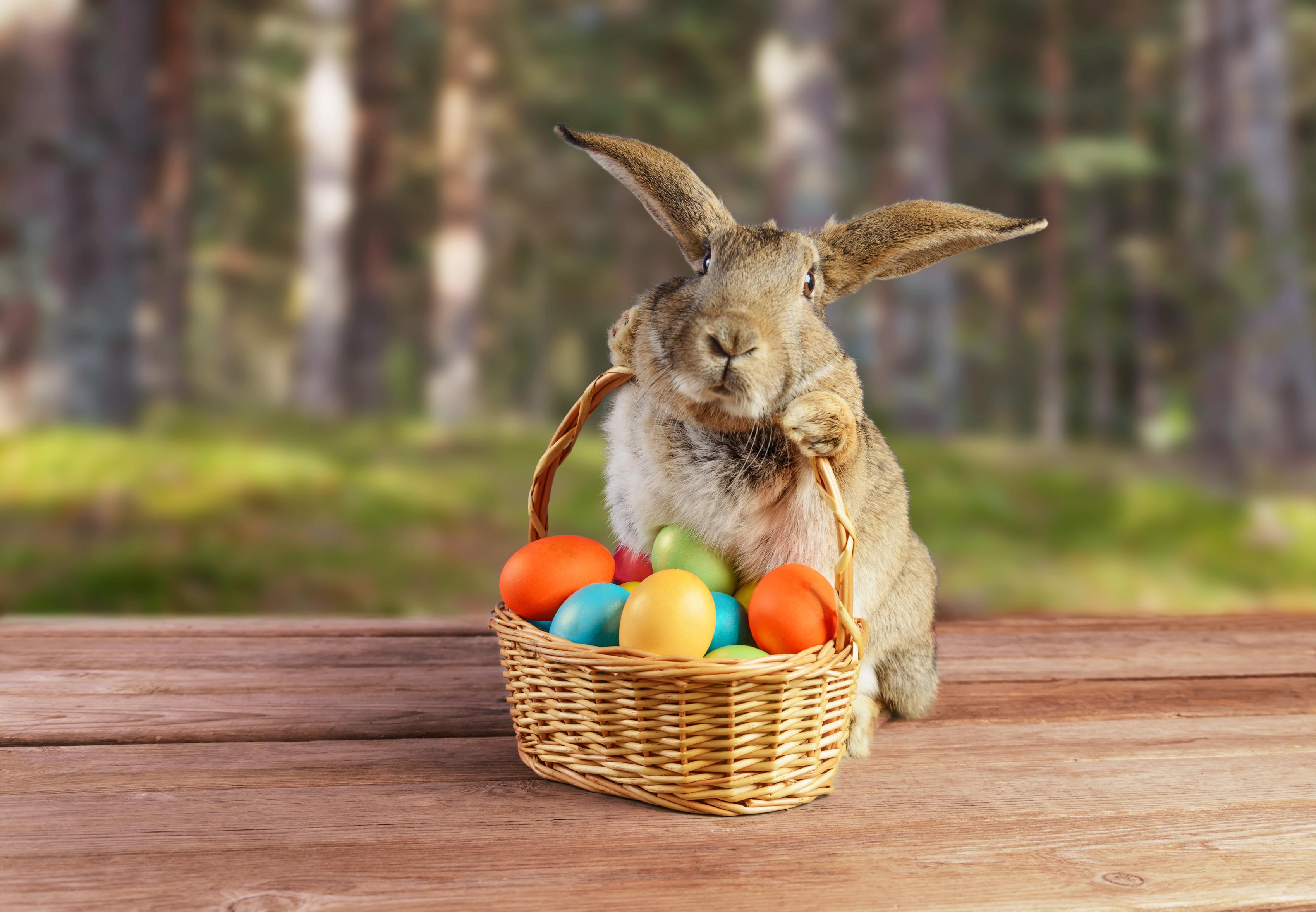 Easter bunny (Photo: Shutterstock)