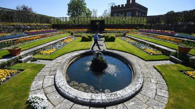 Article thumbnail: Gardens and Estates Operations Manager Graham Dillamore walks in the Pond Garden at Hampton Court Palace, in south west London, which has been temporarily closed while the UK remains in lockdown during the coronavirus pandemic.