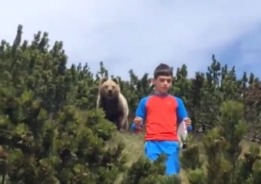 Alessandro Franzoi was praised for his composure despite being stalked by the brown bear