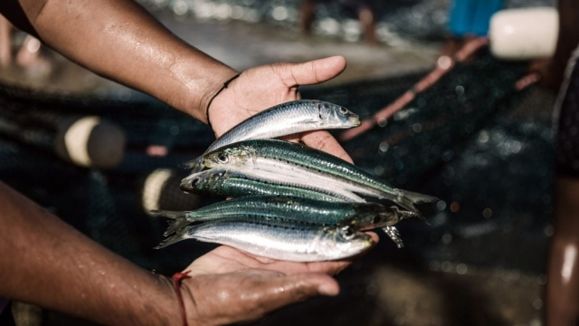 A diet rich in oily fish, dairy and liver will boost people's muscles and immune systems under lockdown and help them fight Covid-19