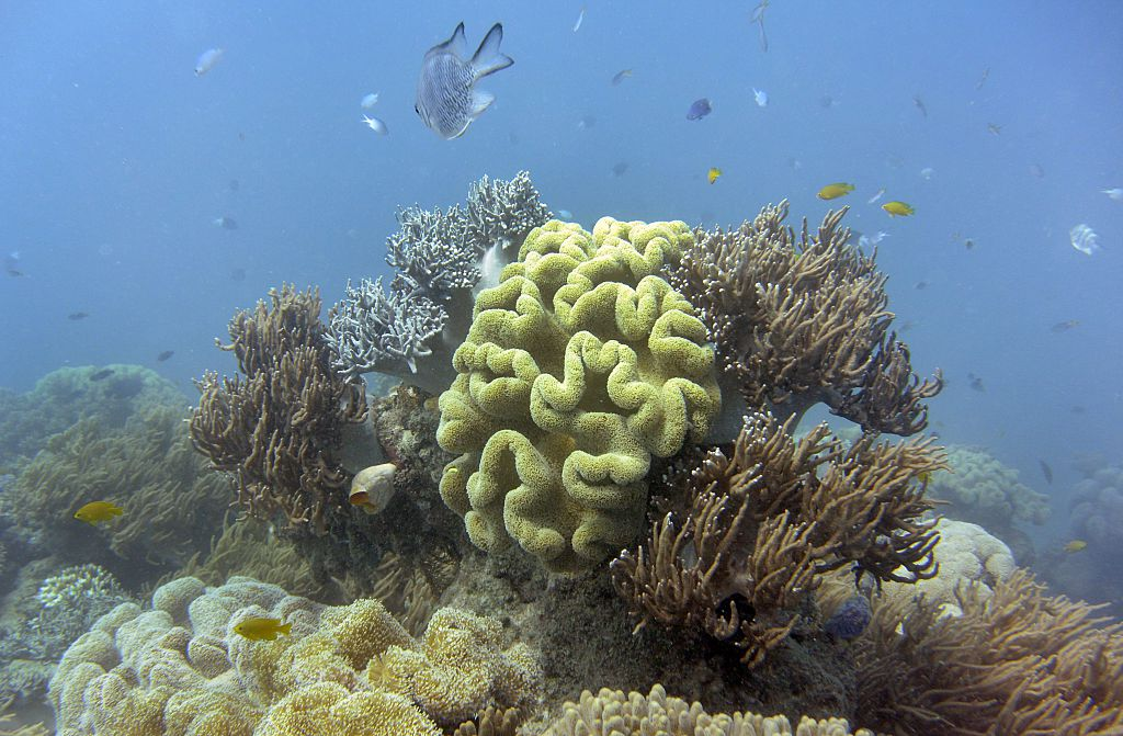 Climate change is the biggest threat to the survival of the coral reefs