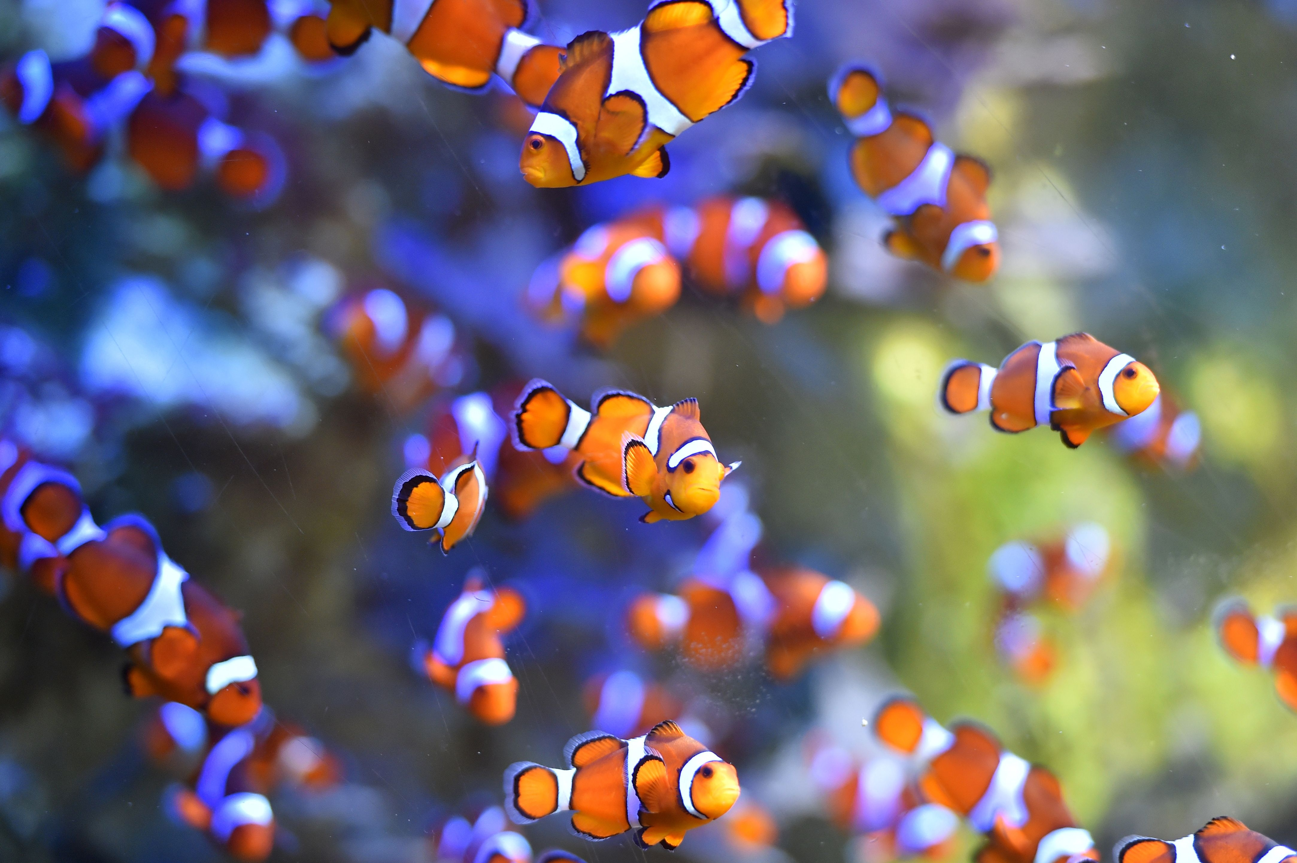 Scientists beginning to understand effects man-made noise have on marine life