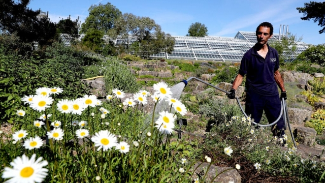 A gardener waters the Rock garden at Kew during lockdown (Getty: Chris Jackson)